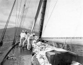 1588-View of Shamrock's crew working on sails. c1900.